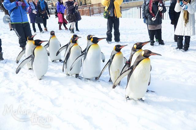 Parade Penguin