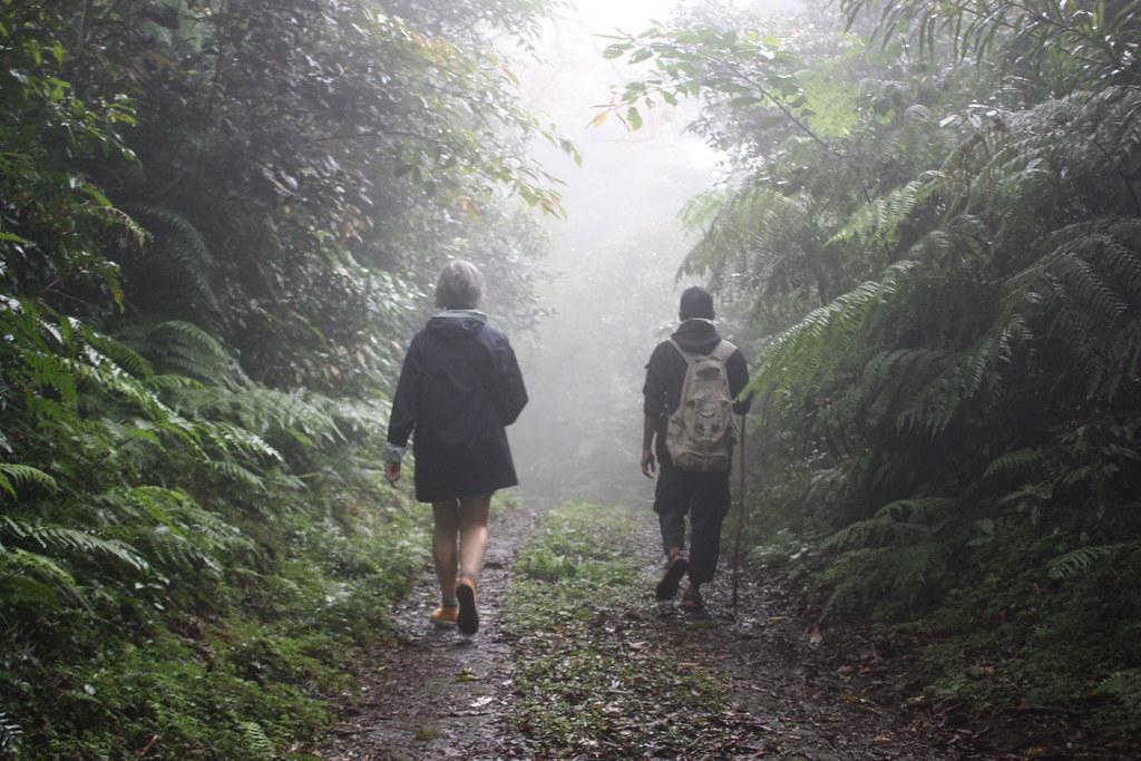Ballade en forêt humide