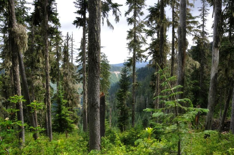 Triangulation Peak Hike 1 @ Mt. Hope Chronicles