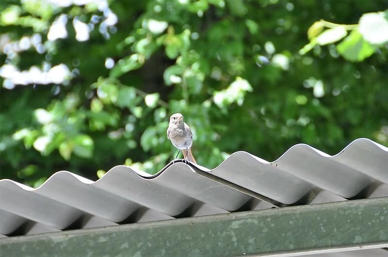 Unknown Bird 16.06 (2)
