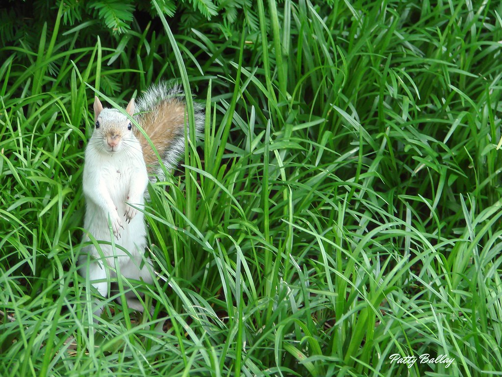 You Looking at Me? - Mostly White Squirrel