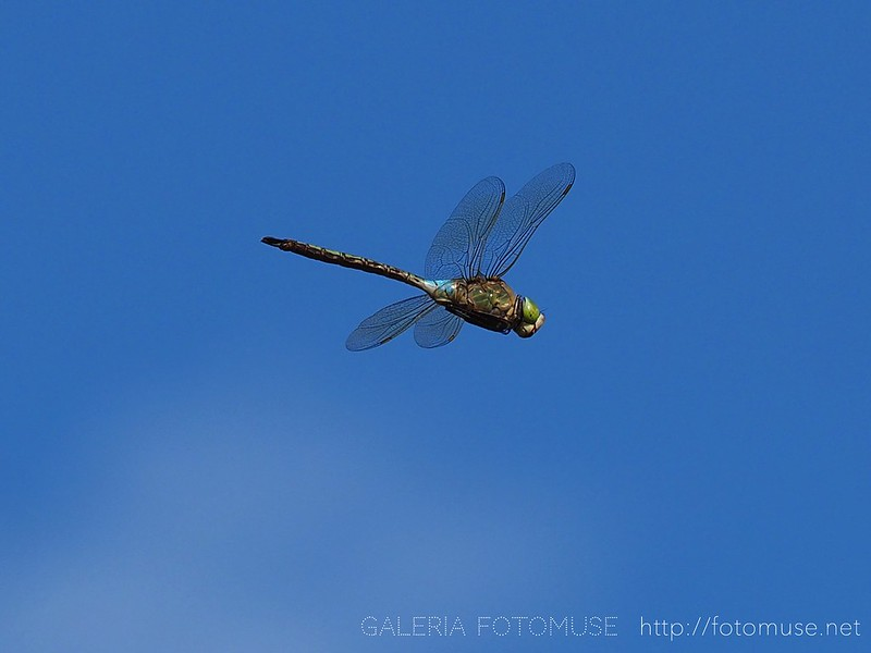 Dragonfly on the sky