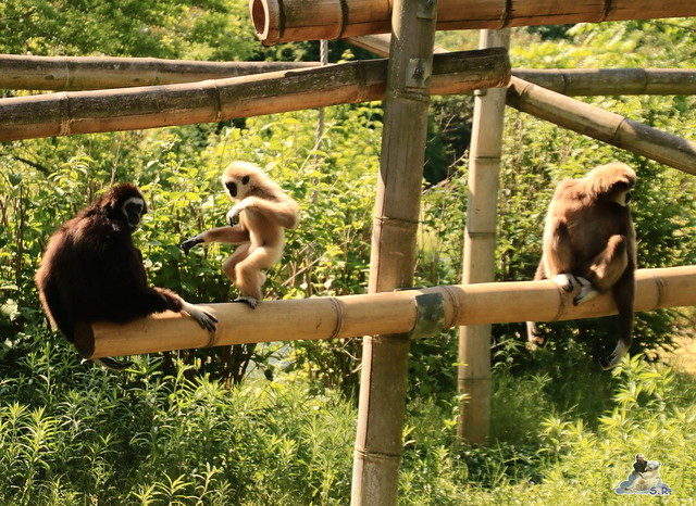 Tierpark Berlin 29.05.2016   018