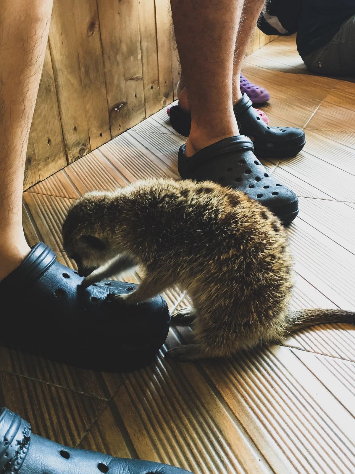 2016 Bangkok Trip   Little Zoo Cafe   On The River Cafe   Thailand Luk Chup Lesson In Bangkok