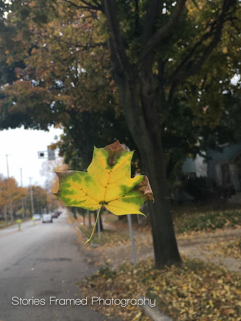 309. | leaf on a windshield.
