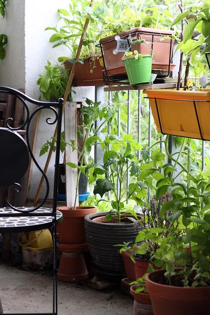 Tiny summer garden
