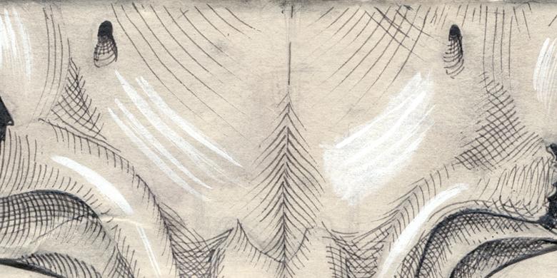 Sketch. Skull.