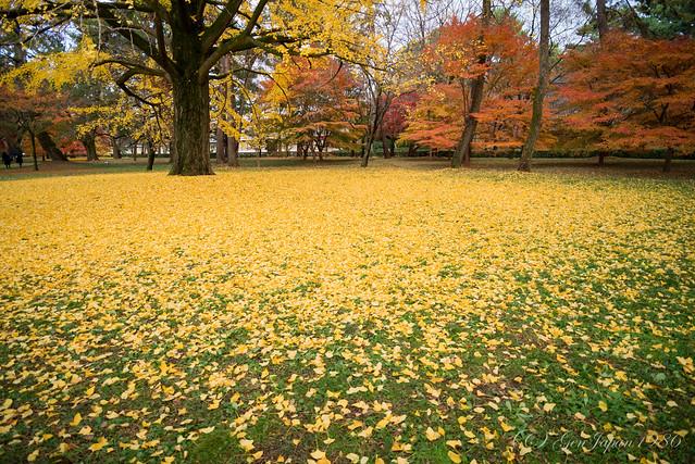 京都御苑/Kyoto Imperial Palace Park (Explore)