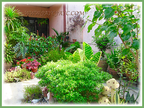 An overview of our frontyard
