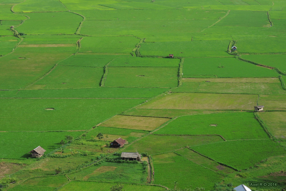Fields - Rantepao, Toraja