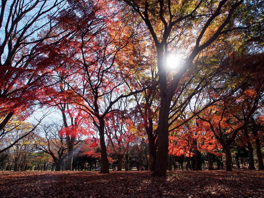 代々木公園 Yoyogi Park