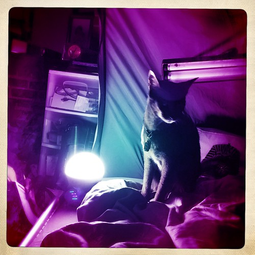 hipstajakenightlight4