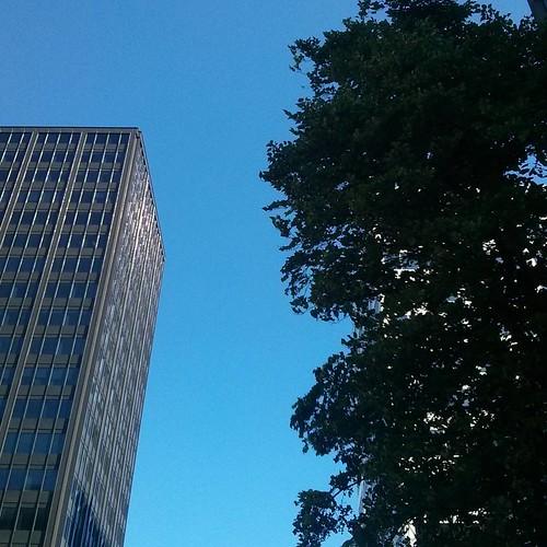 Green and grey on blue #toronto #yongeandstclair #stclair #blue #sky #grey #tower #green #trees