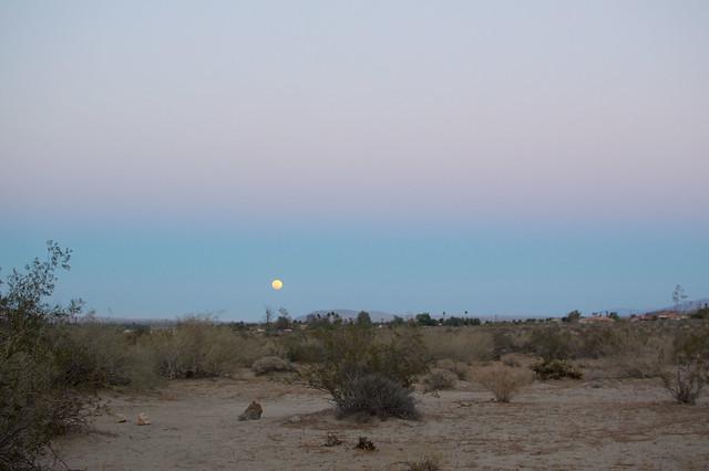 desert moonrise, anza borrego