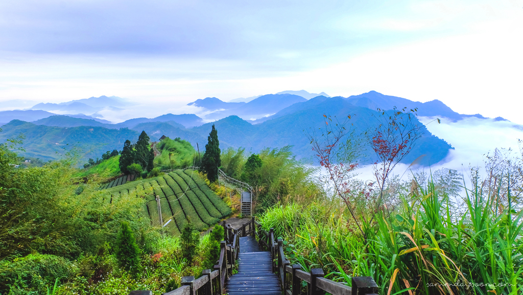 eryanping-trail-alishan-taiwan-travel-sammdaysoon