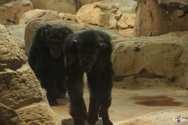 Besuch Zoo am Meer 26.06.20161