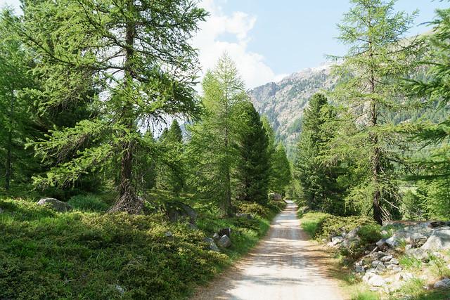 Fahrradstrecke am Berninapass