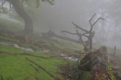 Parque natural de #Gorbeia #Orozko #DePaseoConLarri #Flickr -074