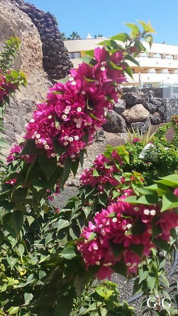 Fuerteventura vom 03.09.-22.09.1695