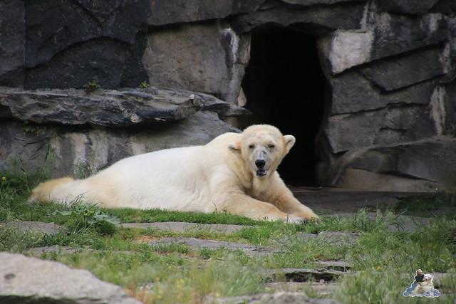 Tierpark Berlin 28.05.2016  080