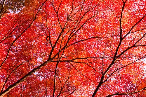 真っ赤なカーテン