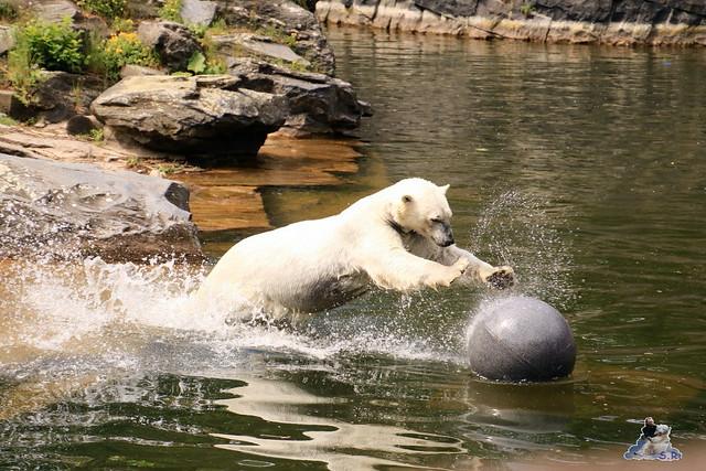 Tierpark Berlin 29.05.2016   073