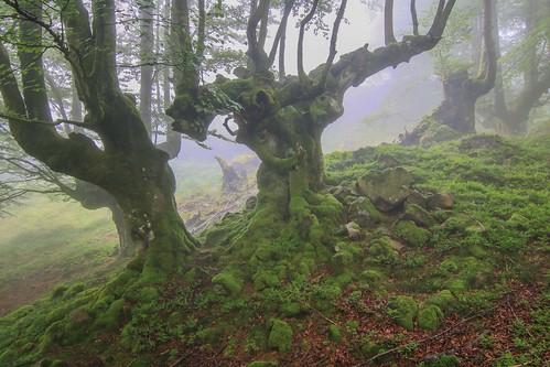 Parque Natural de #Gorbeia #Orozko #DePaseoConLarri #Flickr - -614