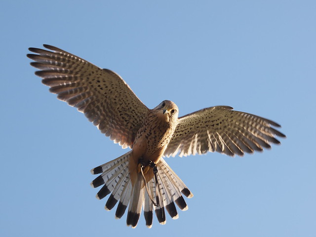 birds 020