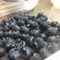 hydroponic blueberries❤︎the berries are quite tiny but delicious  #tokushima #japan #hydroponic #blueberry #徳島 #ブルーベリー #養液栽培
