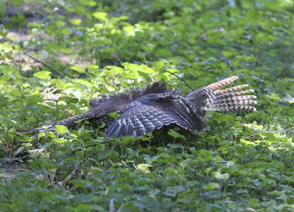 Hawk or mushroom?