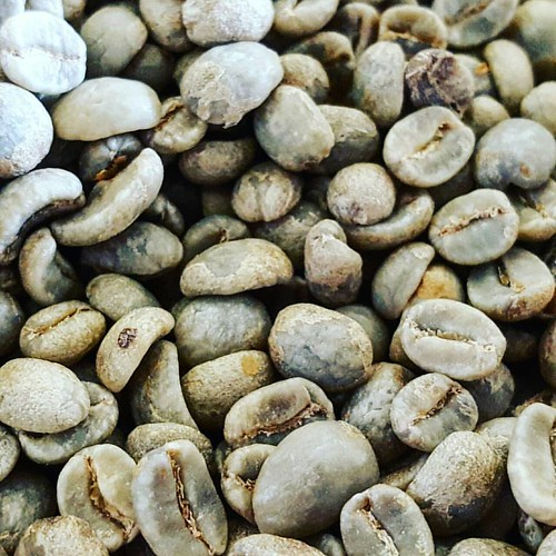 Roasting. Delicious Single Origin coffees await you! In this photo: Ethiopia Kecho Tirtira (green.)