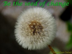 Be the Seed of Change!