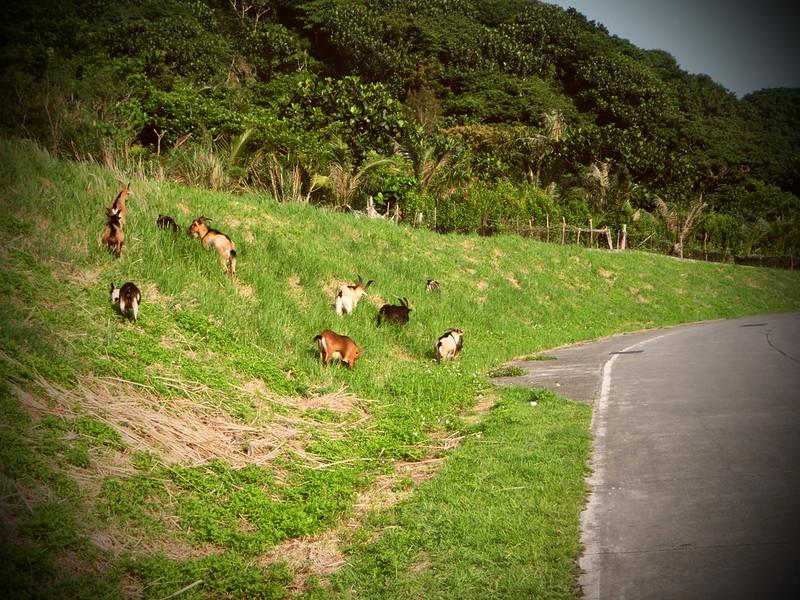 蘭嶼快速導覽-2014環島 (245)
