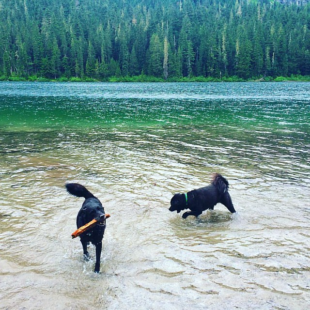 Maggie and Bear Cub splash around Hyas Lake. 💦