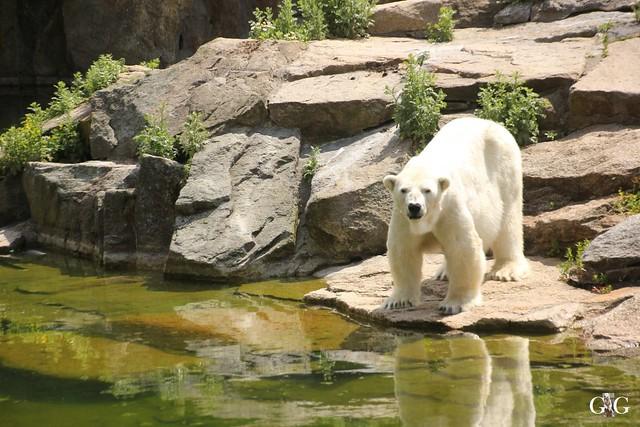 Sonntags-Besuch Zoo Berlin 19.06.201679