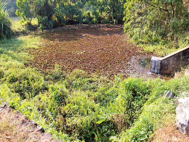 गन्दगी पटा एरनाकूलम का तालाब