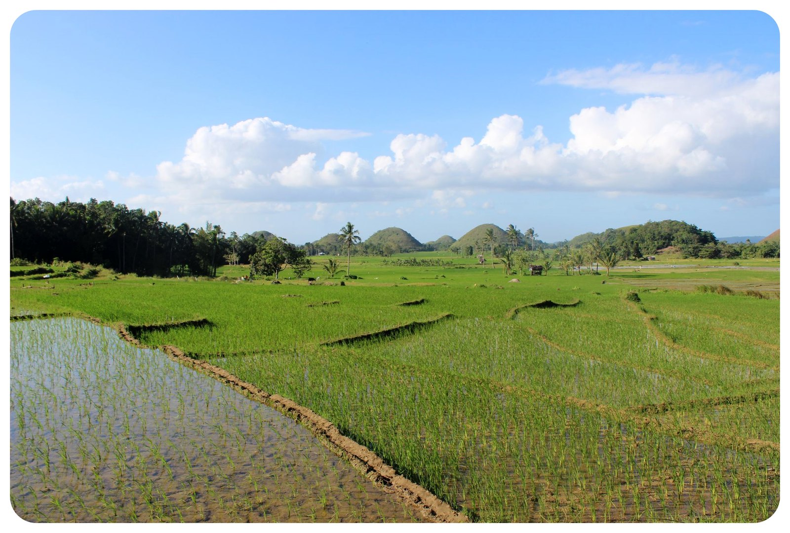 bohol rice fields