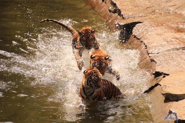 Tierpark Berlin 29.05.2016   0198