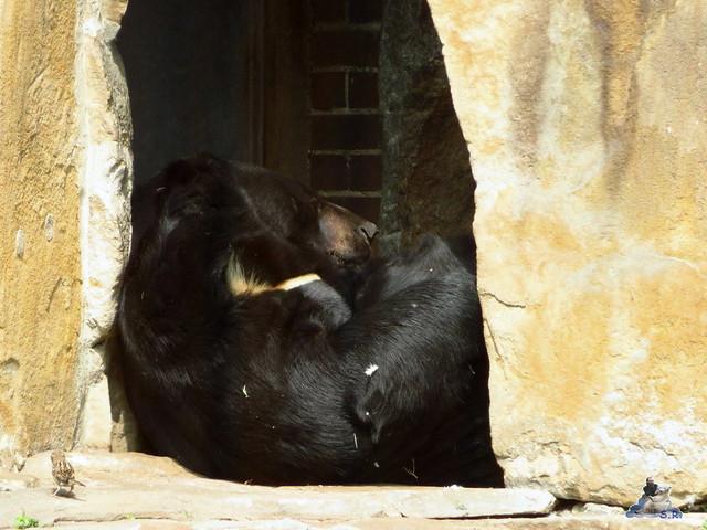 Zoo Berlin 27.05.2016   028