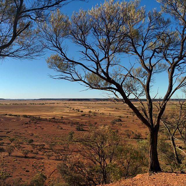 In the early 1990's the state of Queensland bought up a great deal of grazing land to put aside for creating about 20 National Parks. One of them was Bladensburg, near Winton.