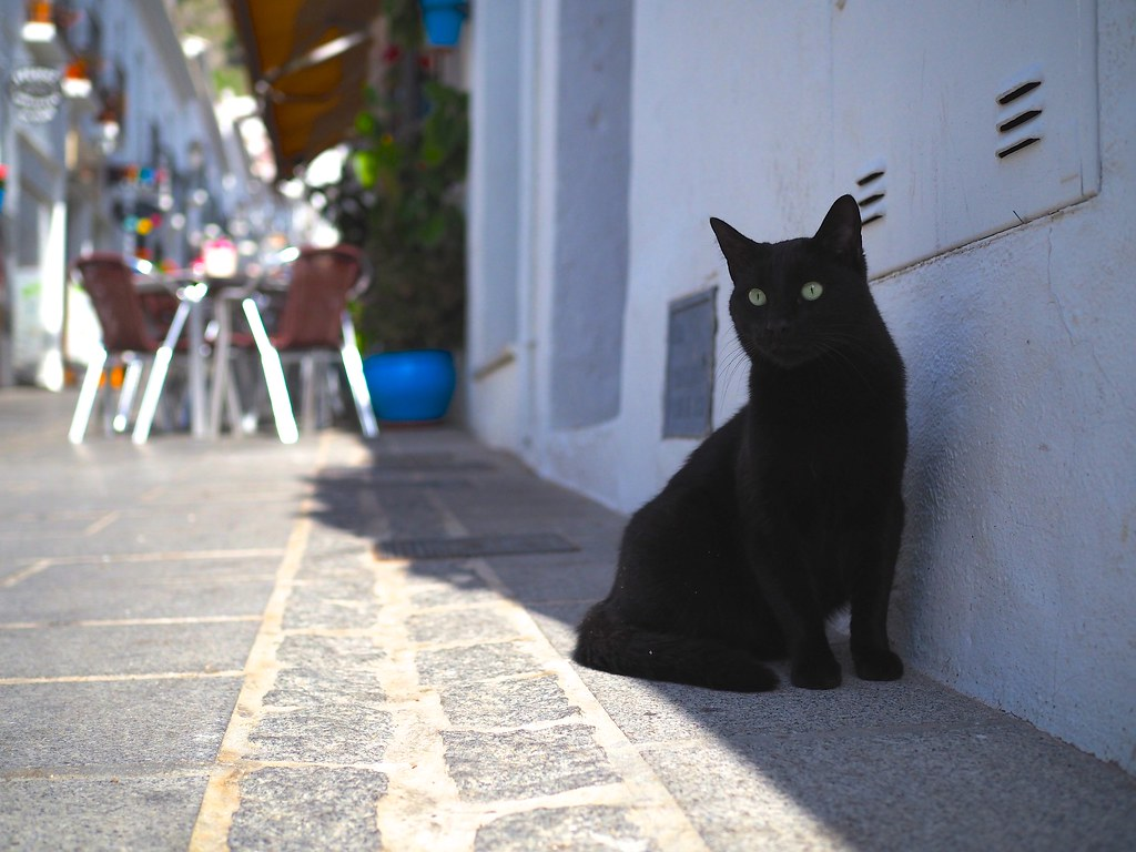 Black Cat at Mijas