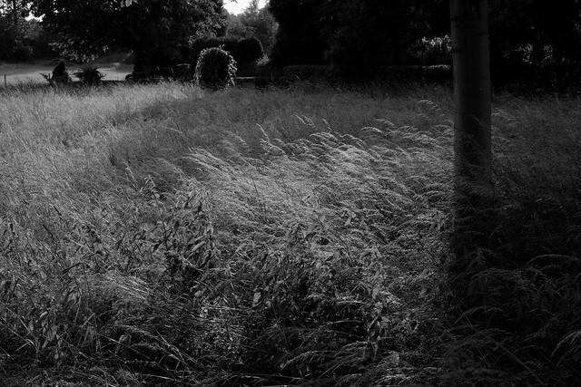 Summer grasses3