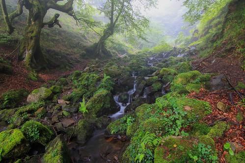 Parque Natural de #Gorbeia #Orozko #DePaseoConLarri #Flickr - -599