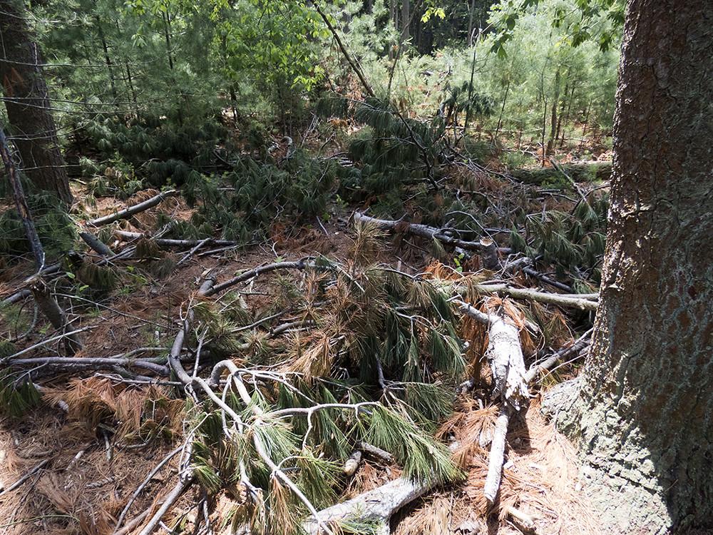 OCP Arborcide_2