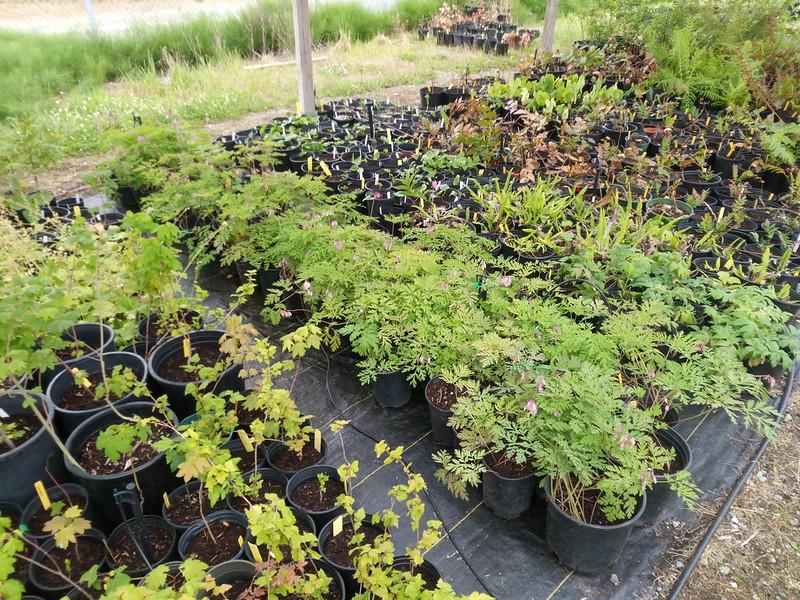 New SER-UW Native Plant Nursery hoop house