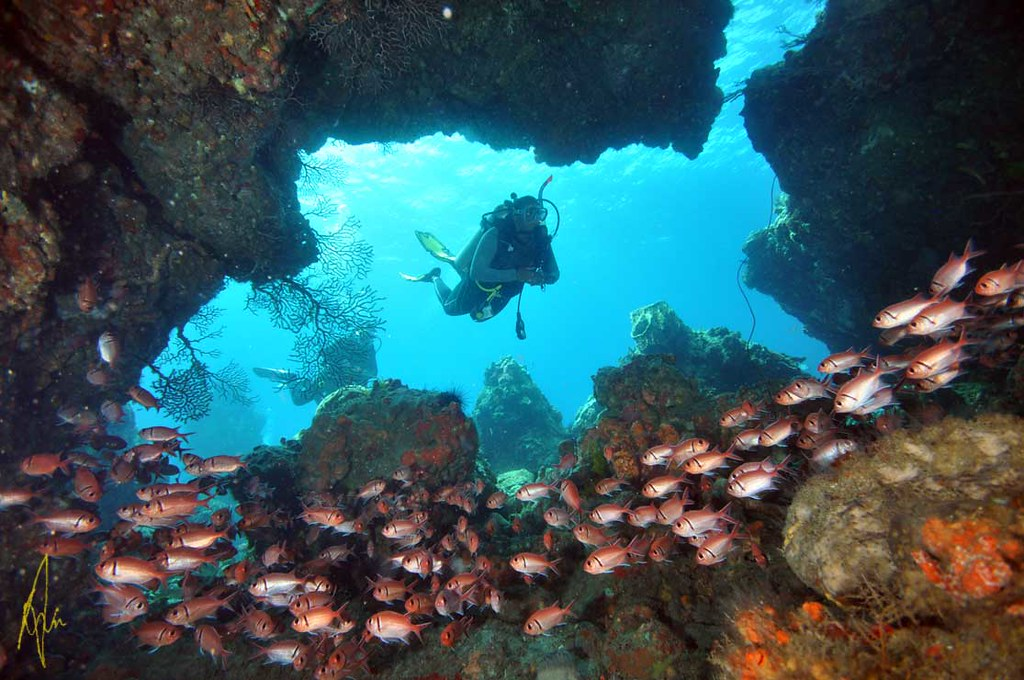 Soldierfish cave