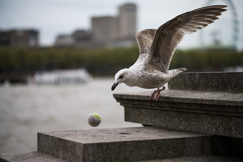 Tenis seagull player