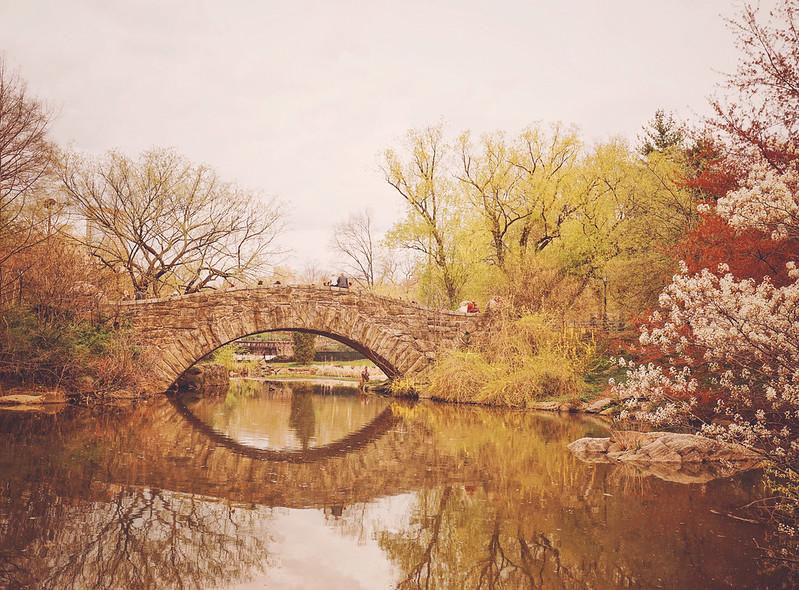 Central Park - Cherry Blossoms - Springtime New York City