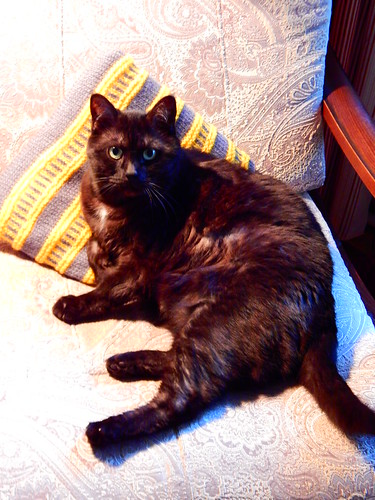 чёрный кот Муся лежит на кресле | horoshogromko.ru