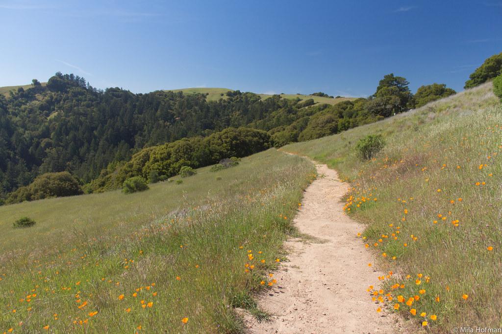 Skyline Ridge Open Space Preserve